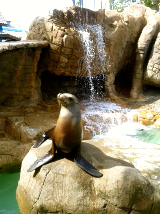 Sea lions are always fun